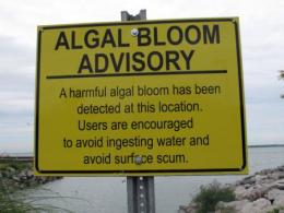 An algae advisory in Sandusky Bay in 2011. Photo by Brenda Culler, Ohio Department of Natural Resources.
